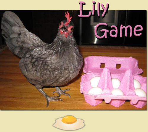 Nourriture pour pondeuse? Lily1110