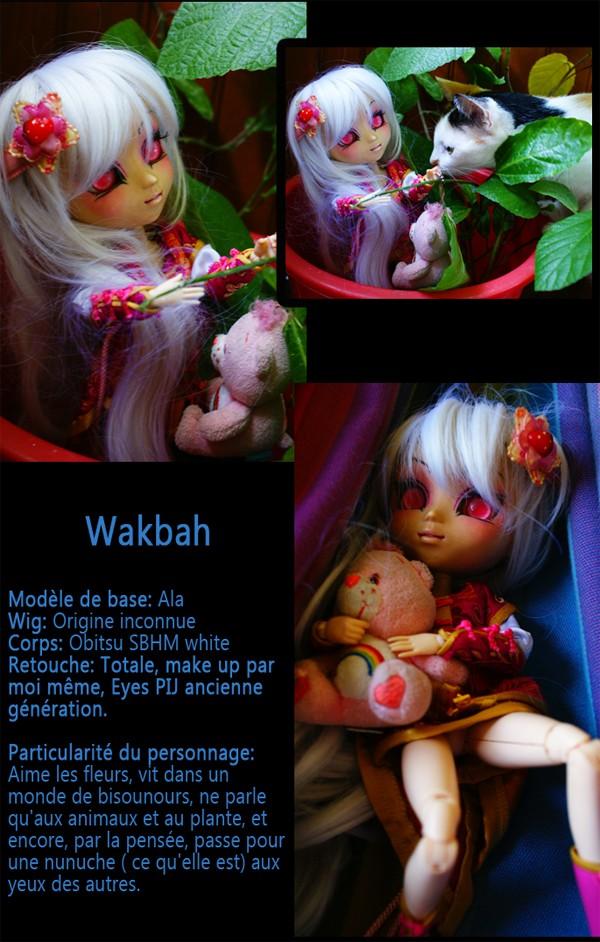 Quelques nouvelles photos [p.2] - Page 2 Wakbah10