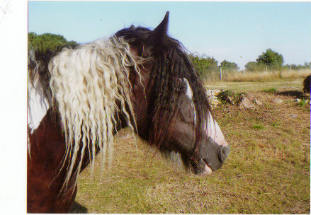 l'écurie des près Blais nvelles photos Offali10