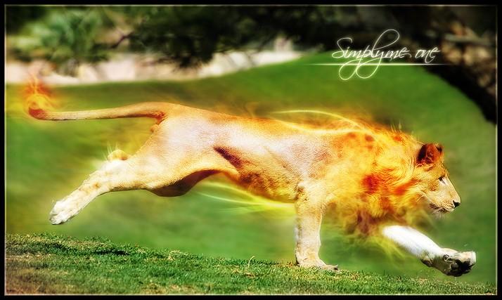 mes crea photoshop Lion_s10