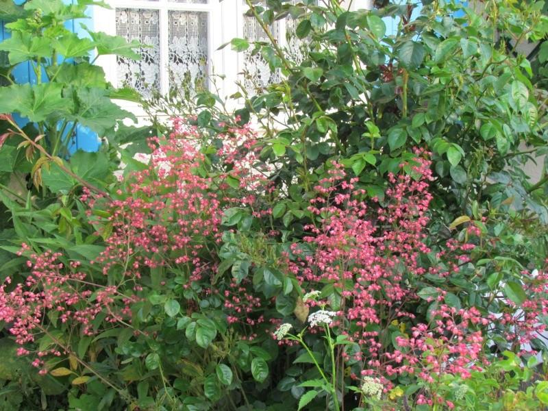mon Jardin 2013 1112