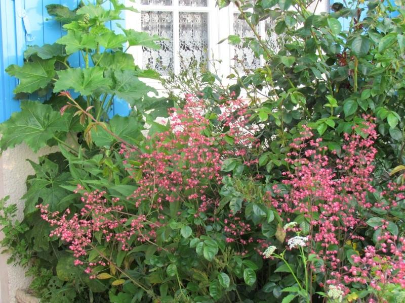 mon Jardin 2013 114