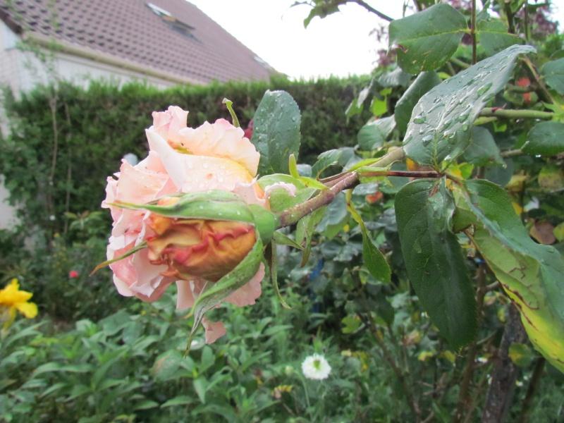 mon Jardin 2013 118