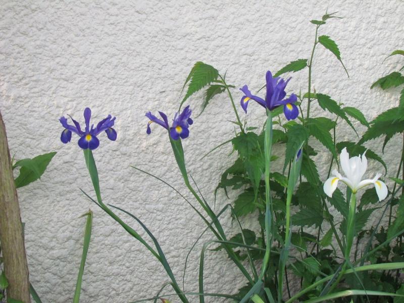 mon Jardin 2013 1211