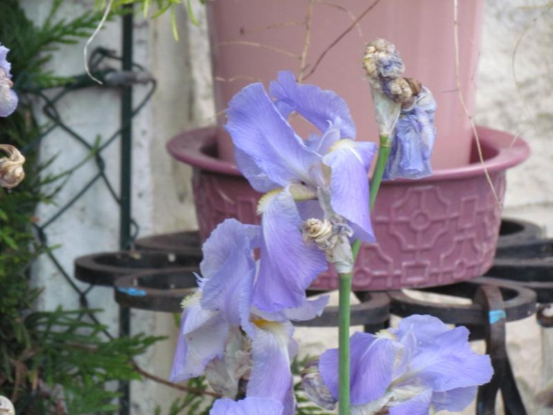 mon Jardin 2013 1412