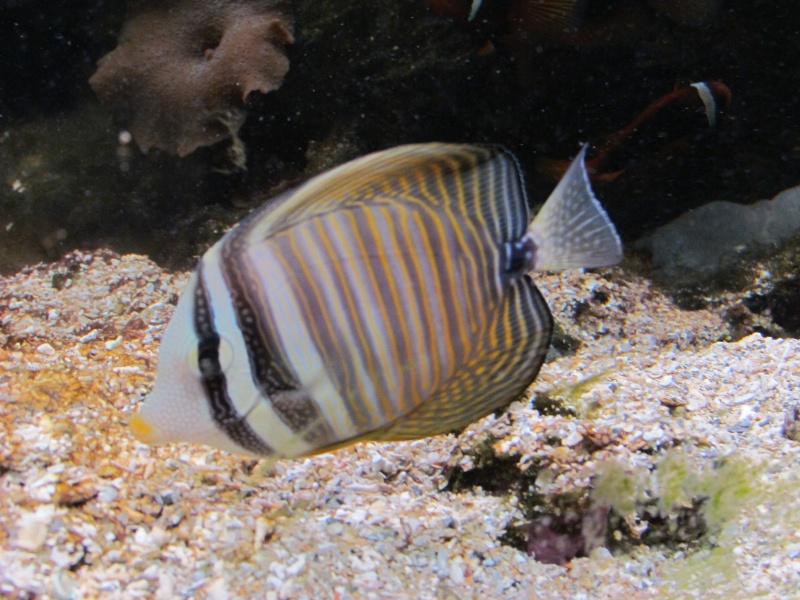 les poissons .......................GRANVILLE 50 1710