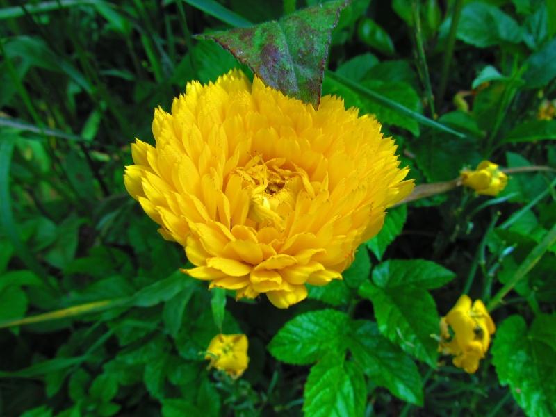 mon Jardin 2013 20_211