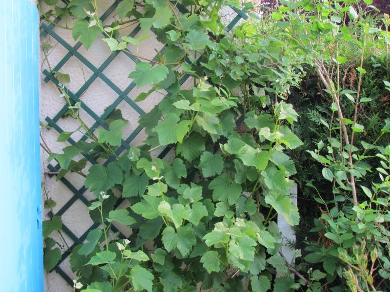 mon Jardin 2013 215