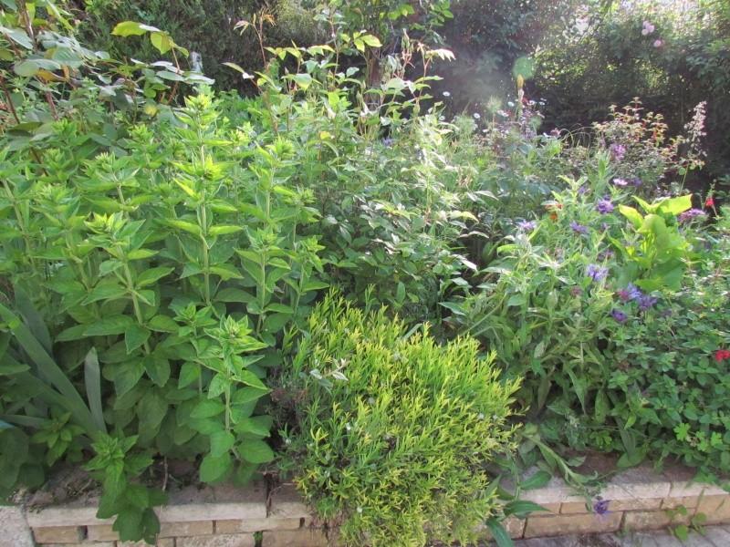 mon Jardin 2013 2511