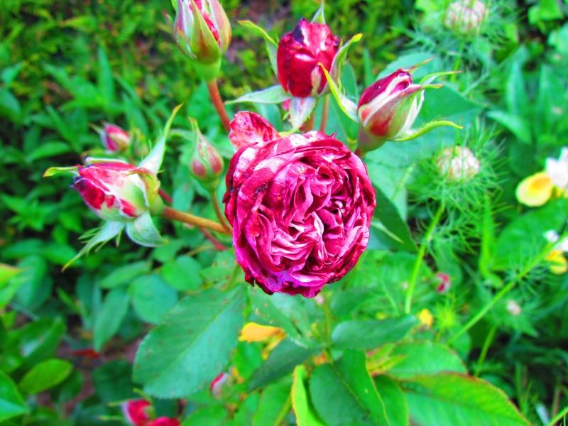 mon Jardin 2013 2711