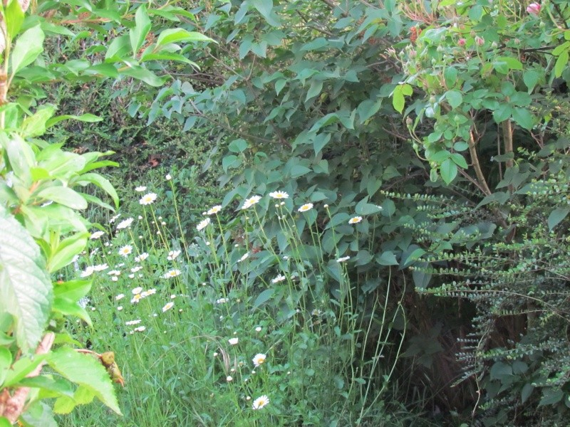 mon Jardin 2013 2810