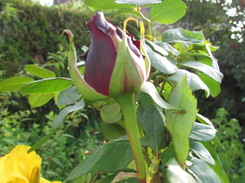 mon Jardin 2013 3110