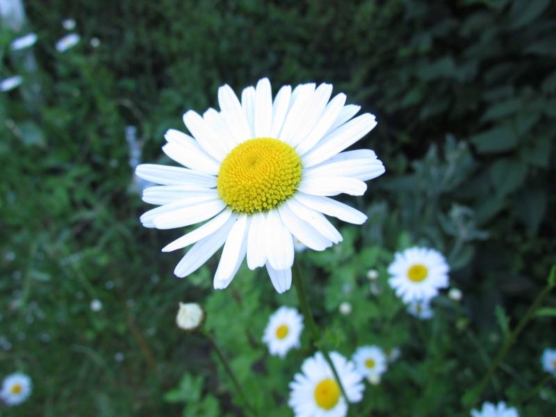 mon Jardin 2013 3311