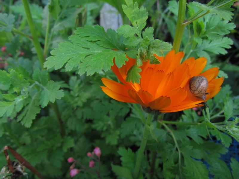 mon Jardin 2013 3510