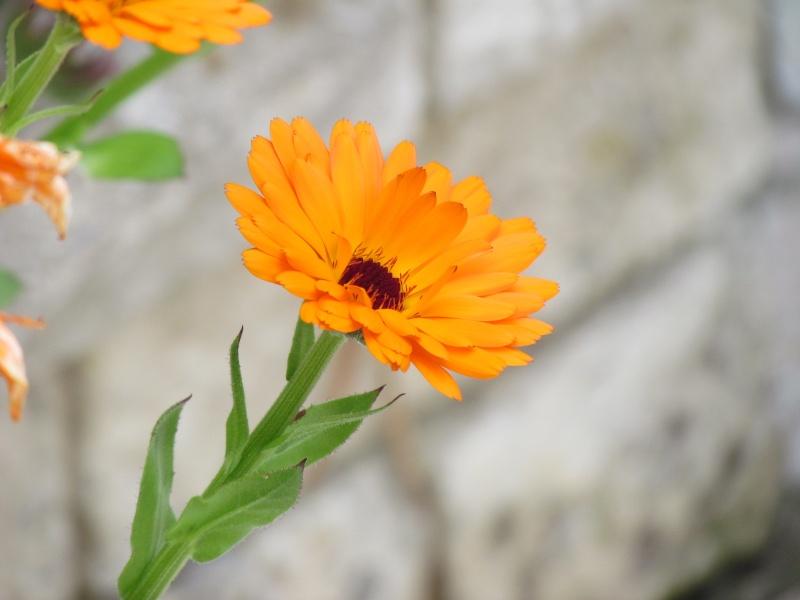 mon Jardin 2013 4110