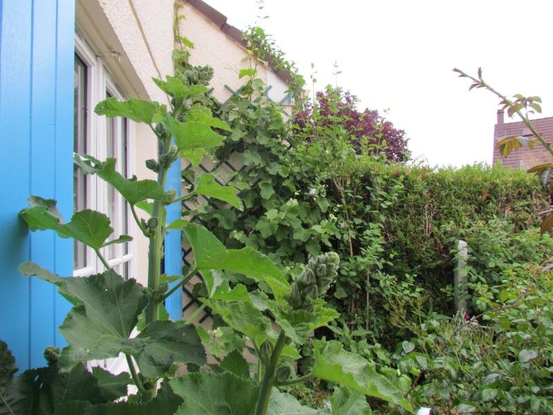 mon Jardin 2013 - Page 2 415