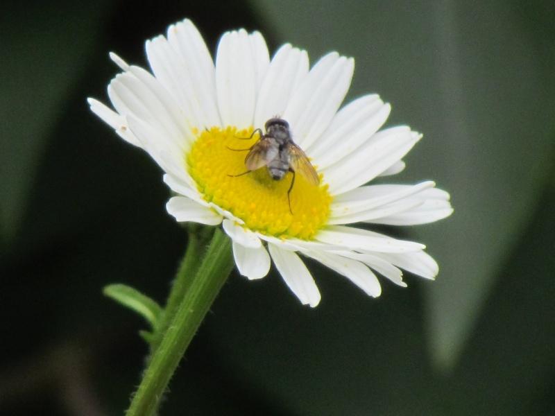 mon Jardin 2013 4610