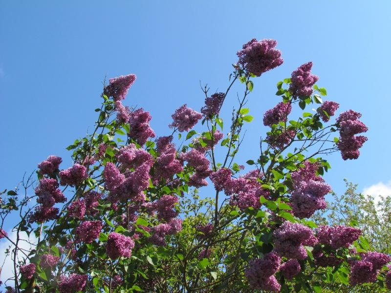 mon Jardin 2013 4810