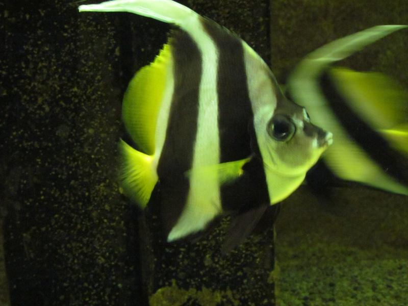 les poissons .......................GRANVILLE 50 610