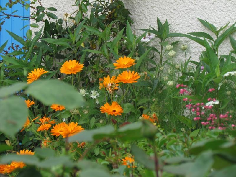 mon Jardin 2013 - Page 2 713