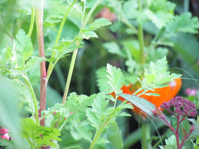 mon Jardin 2013 914