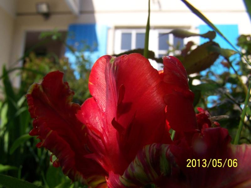 mon Jardin 2013 - Page 2 Mai_ju10
