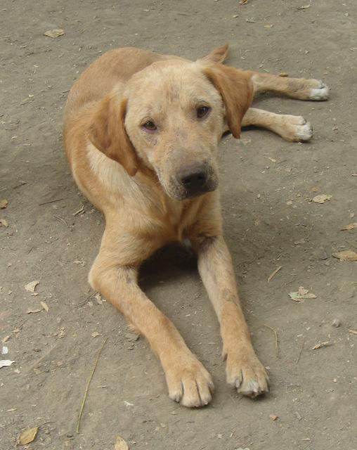 Zlatko, 2 ans, gros soucis de peau, en Serbie (refuge Bella) Zlatko10
