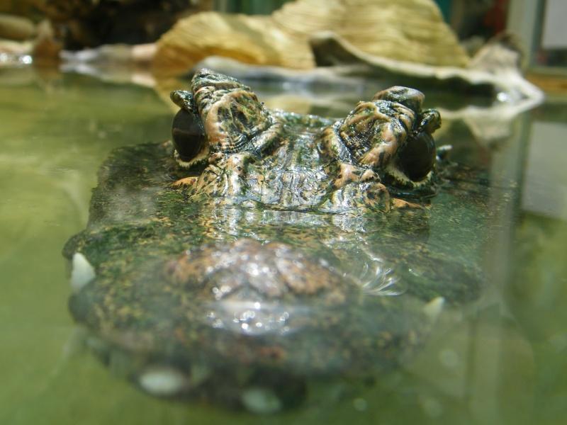 Ferme aux crocodiles Pierrelatte (26) 100_0418