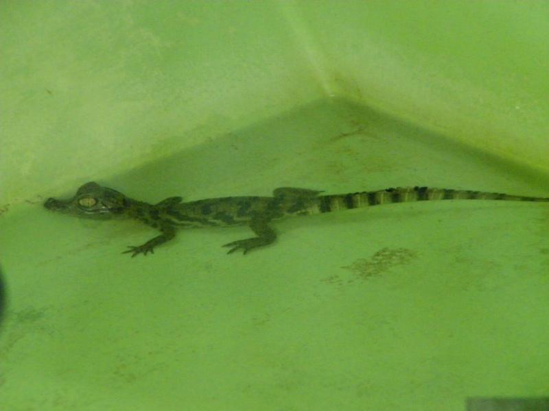 Ferme aux crocodiles Pierrelatte (26) 100_0513
