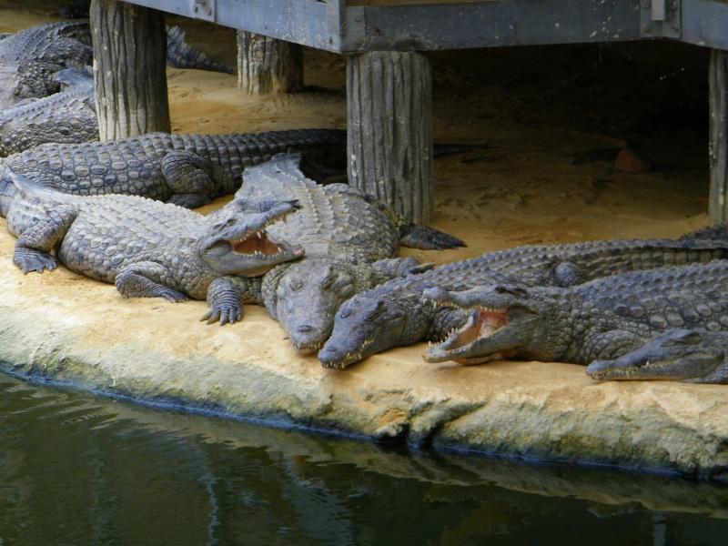 Ferme aux crocodiles Pierrelatte (26) 100_0611