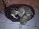 CANDY - femelle husky 12 ans - Asso TAIGA [DECEDEE] - Page 9 Photos10