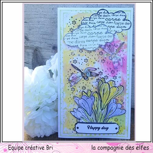 Cartes libellule 3/3 Carte_46