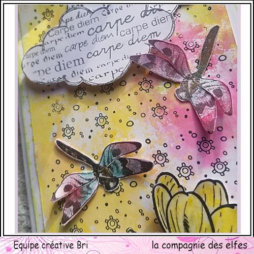 Cartes libellule 3/3 Carte_47