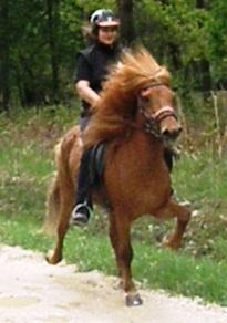 Inédit ! Stage d'Equitation Islandaise - 28 et 29 Juin Pandra10
