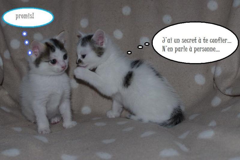 La face cachée de l'Ecole du chat de Quiberon - Page 3 Imgp0059