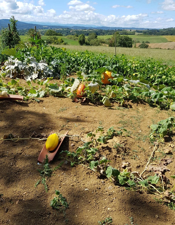 Les dernières récoltes au jardin 20190916