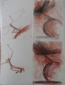 Voler de ses propres ailes - Page 9 Img_0110