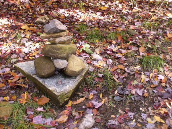 concour automne Hpim8610