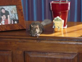 gribouille et noisette au paradis des ecureuils Divers28