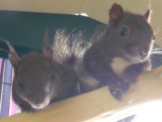 gribouille et noisette au paradis des ecureuils Les_be10