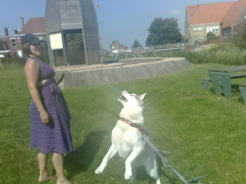 VOLK, husky de 3 ans dans l'aude (11) - Page 5 04072014