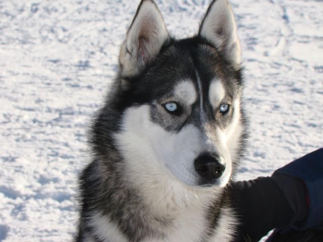 Nos loups grandissent, postez nous vos photos - Page 3 Dsc00911