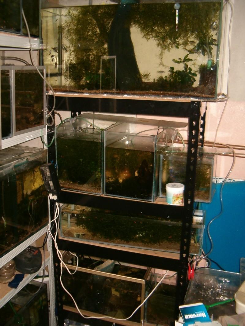 Fishroom de jm8021 Photo123
