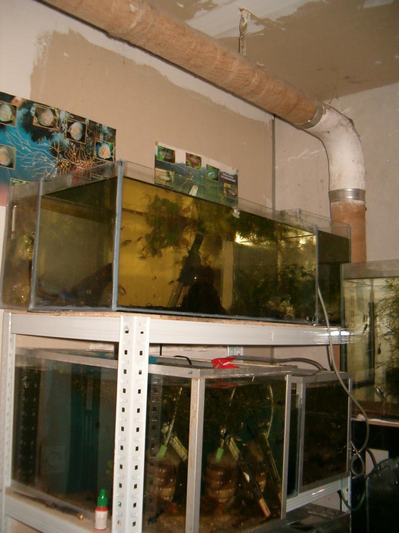Fishroom de jm8021 Photo125