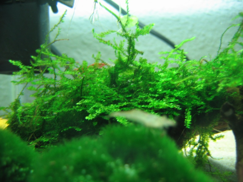 mon bac à crevettes et mon verre à pied Img_6412