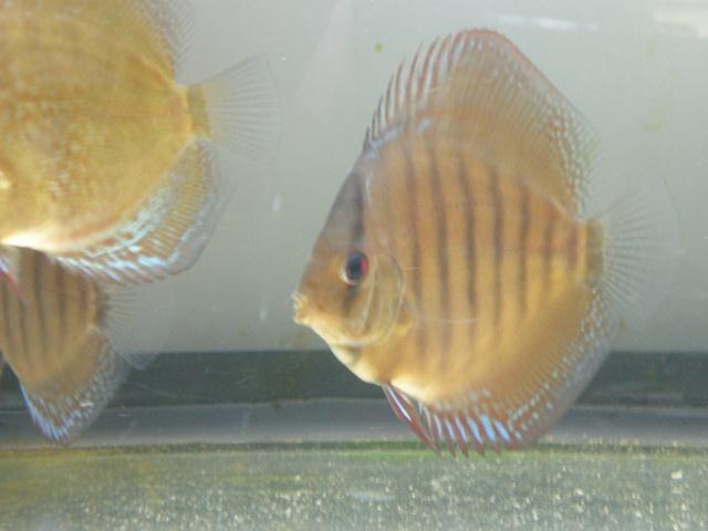evolution de non brun de marie et bernard 3710