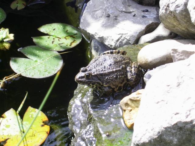 Votre  photo pour Octobre 2009 - Page 2 00512