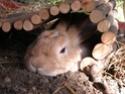 Canaille, mâle de 7-8 mois Canail19