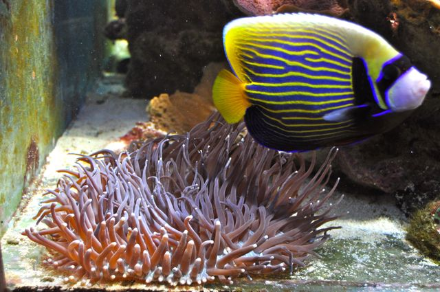 le reef tank d'harold - Page 38 Ab10
