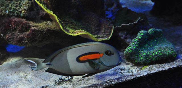 le reef tank d'harold - Page 38 Ch10